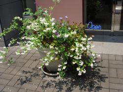 Flowerhiro